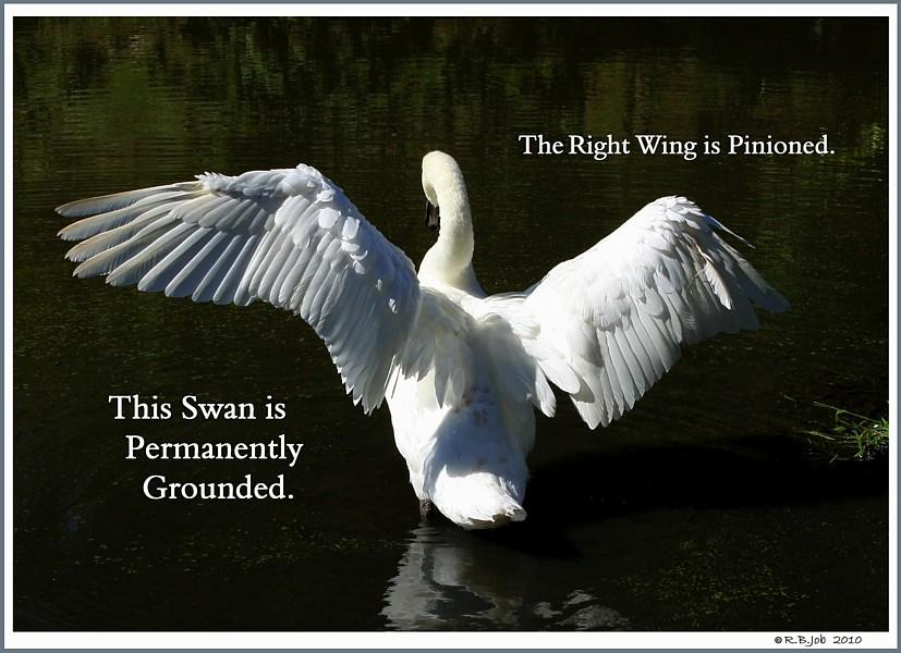 Swan Pinion Wing