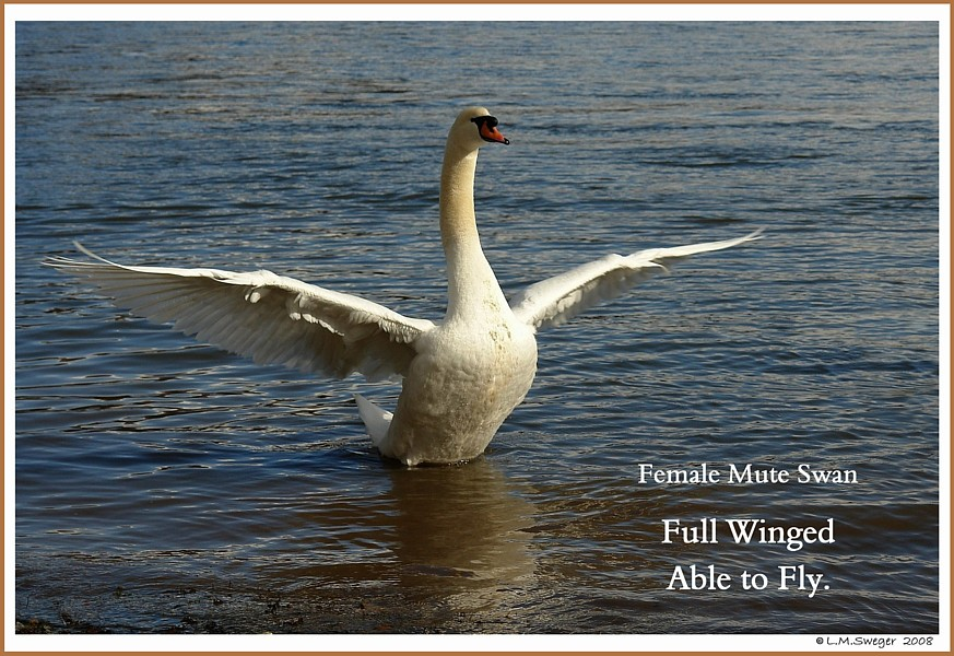 Keep Your Swan Grounded