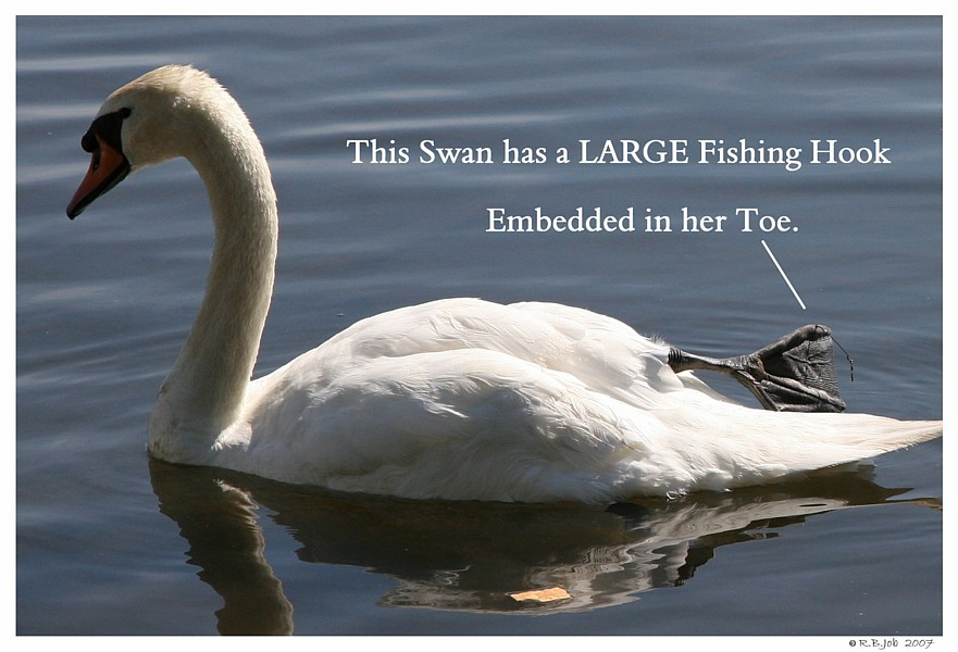 Swan Fishing Hook