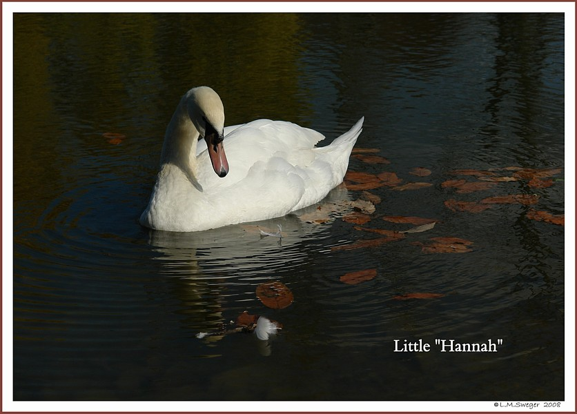 Swan Clostridium Botulism