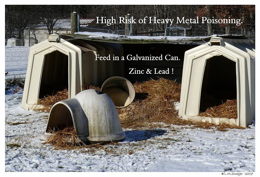 Swan Heavy Metal Poisoning