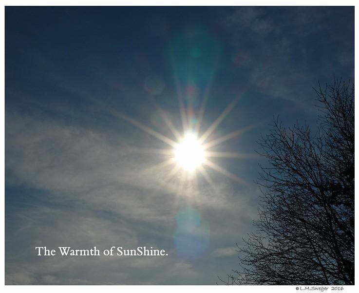 Swan Warm SunShine