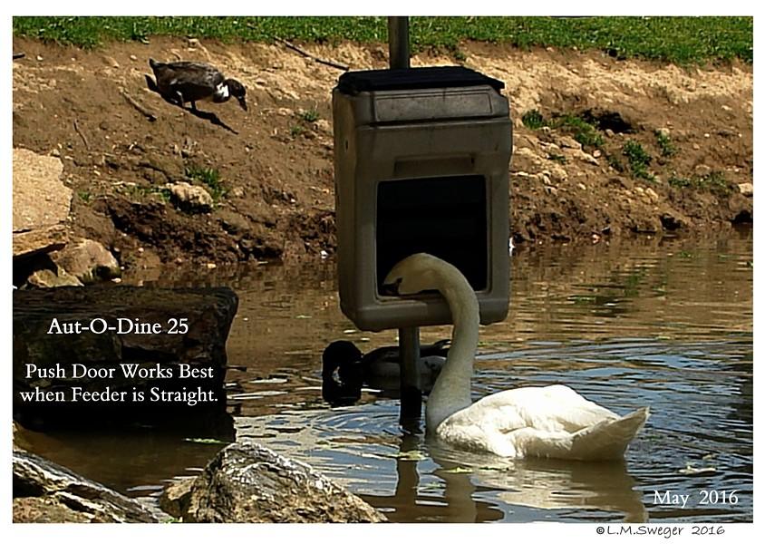 Aut-O-Dine Feeder for Swans