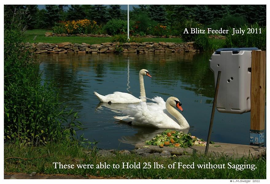 Blitz Swan Feeder