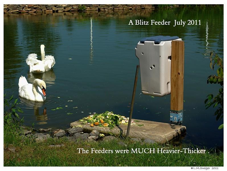 Swan Feeder