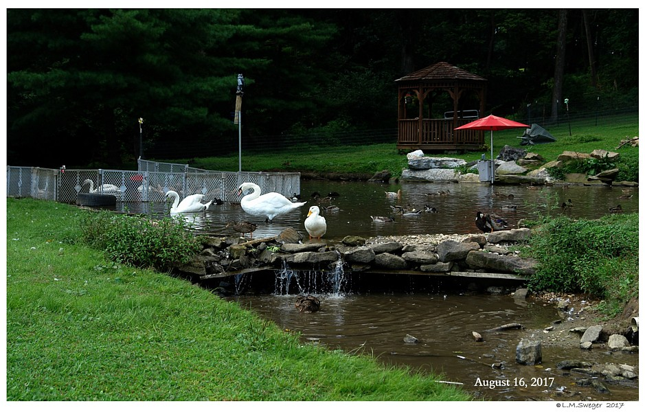 Mixed Waterfowl Pond