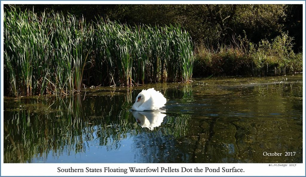 Southern States Floating Waterfowl Pellets
