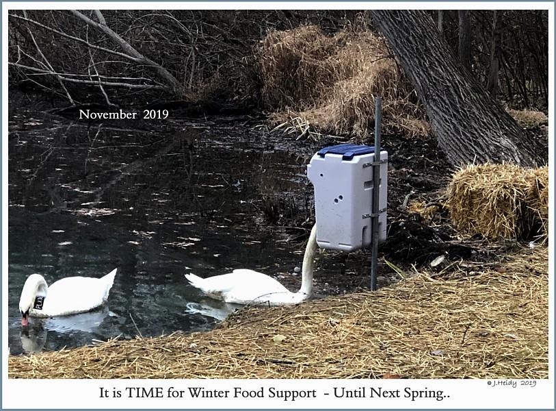 Aut-O-Dine 25 Swan Feeder