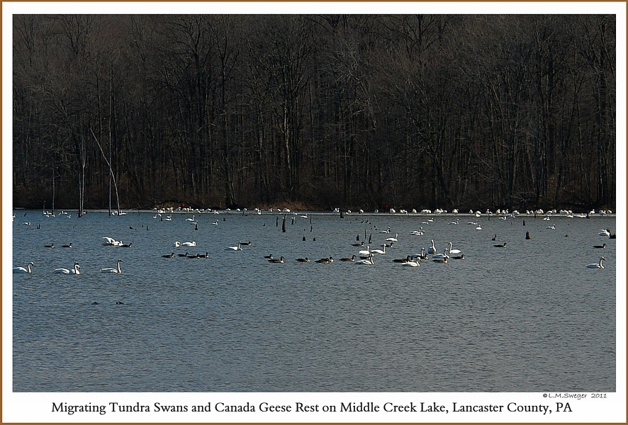 Spring Waterfowl Middle Creek