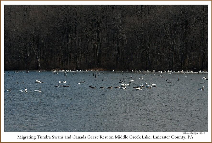 Spring Waterfowl Middle Creek
