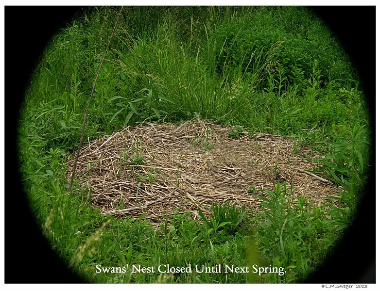 Swan Nest Closed