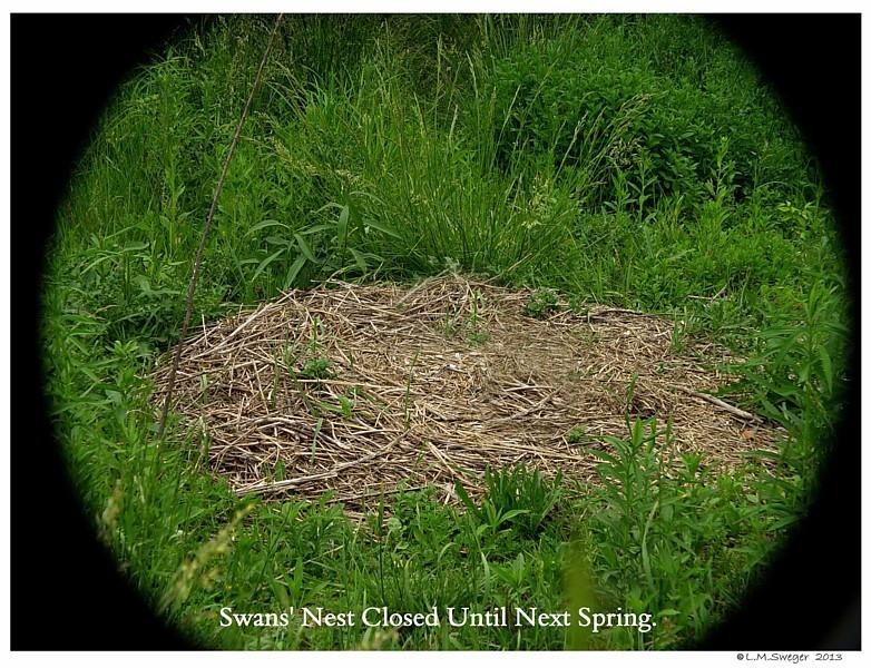 Swan Nest Closed