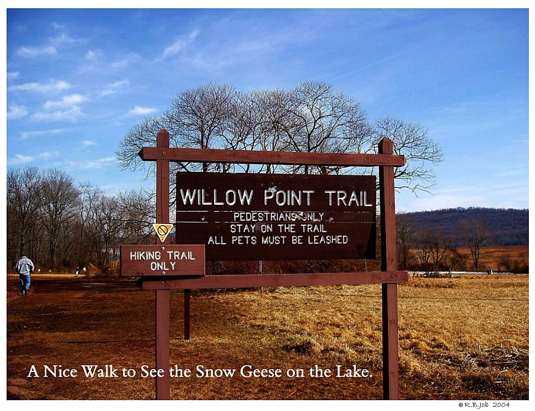 Middle Creek Willow Point