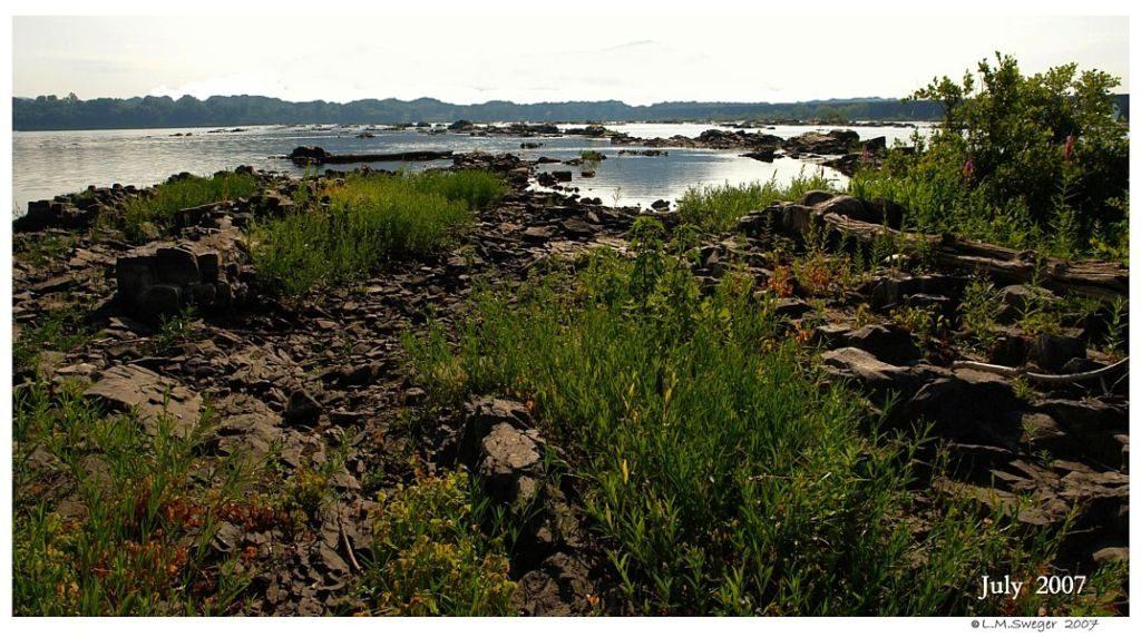 Tundra Swan Nesting Areas