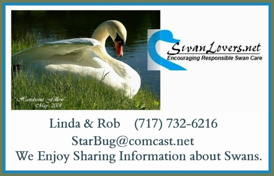 SWANLovers Info