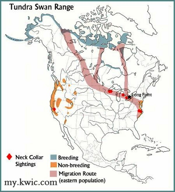 TUNDRA SWAN Migration Range MAP
