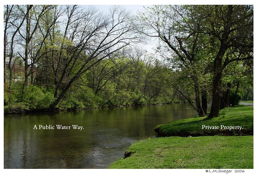 Mute Swan Public Waterway