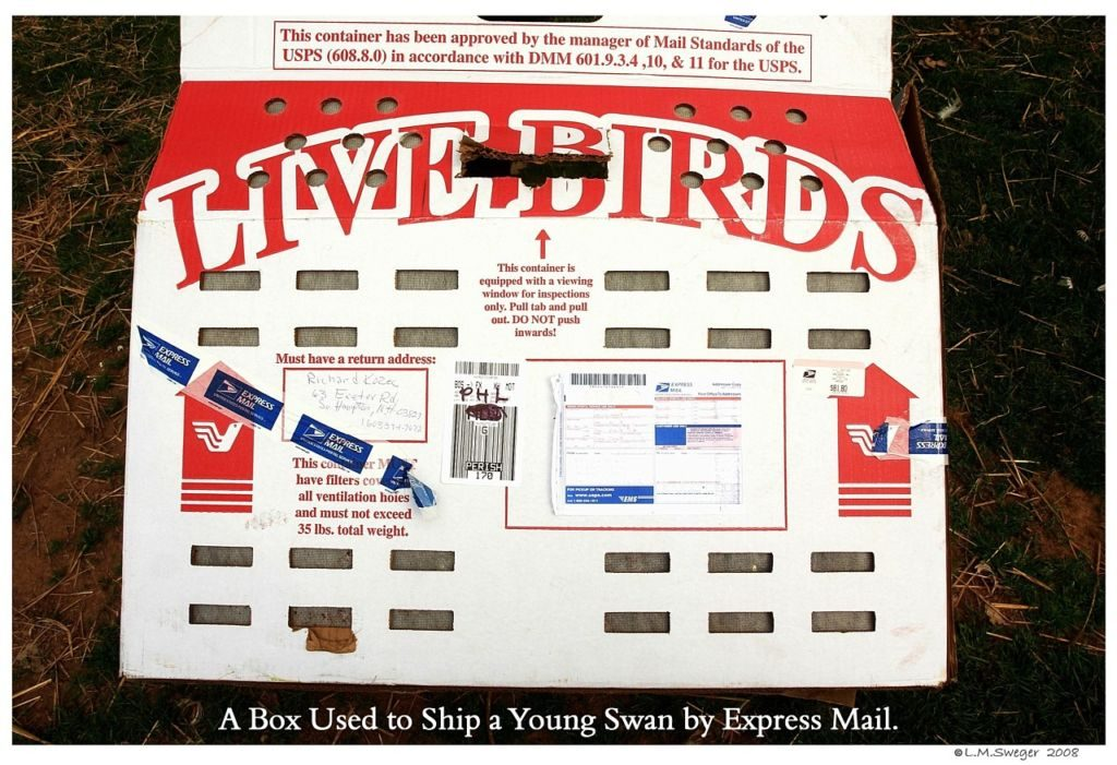 Express Mail Swan