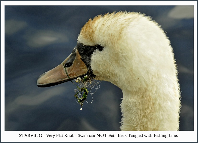 SWAN Fishing Hook