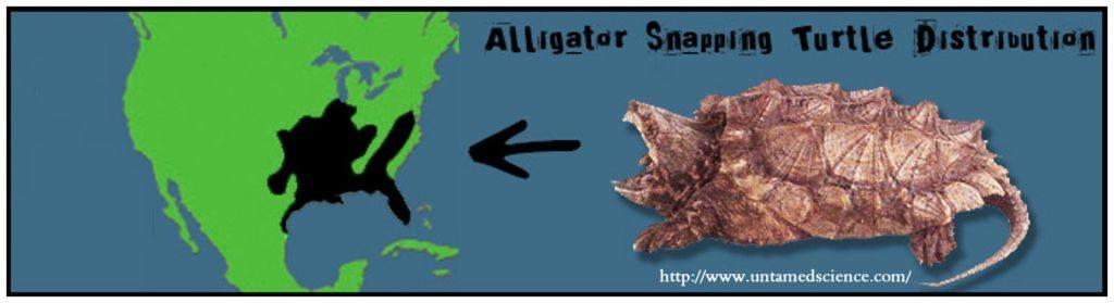 TURTLE Alligator Snapping Range
