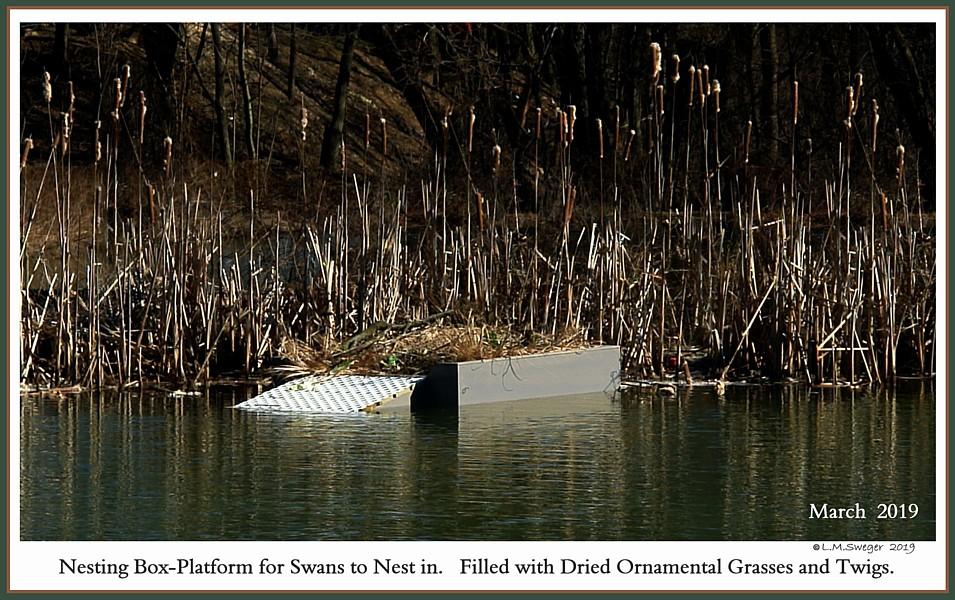 SWAN FLOATING NEST Box-Platform