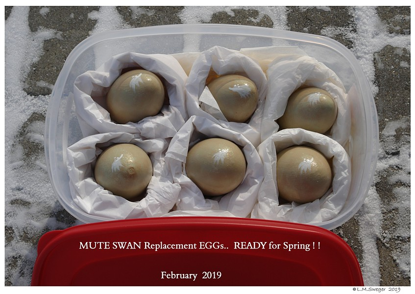 SWAN REPLACEMENT EGGs