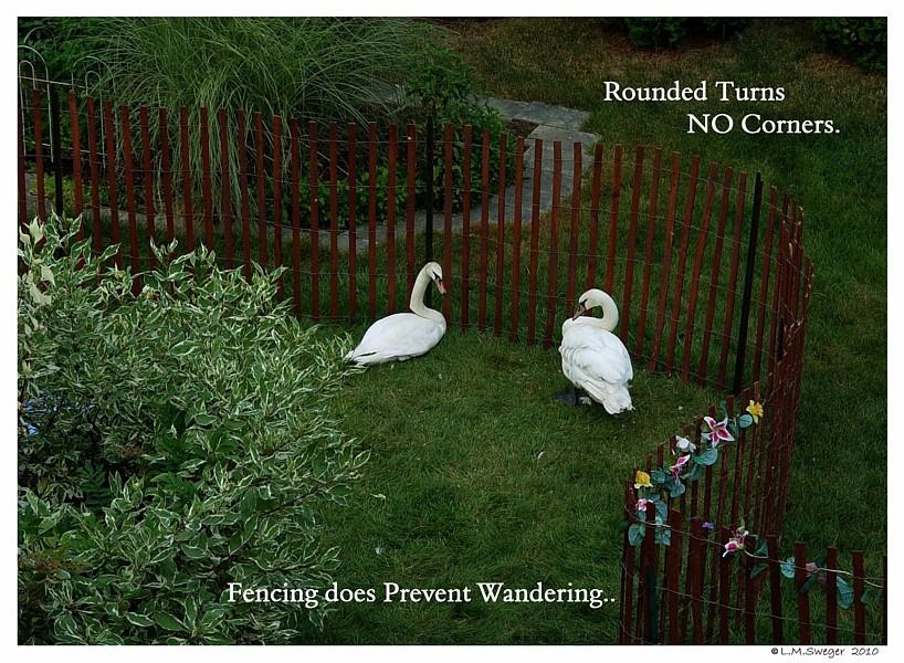 Swan Capture Fencing