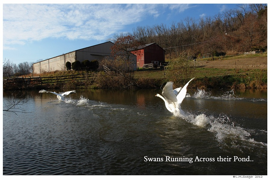 Catching Swans