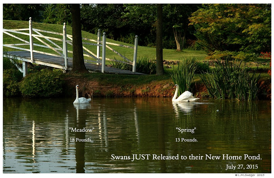 Keeping Swan Records
