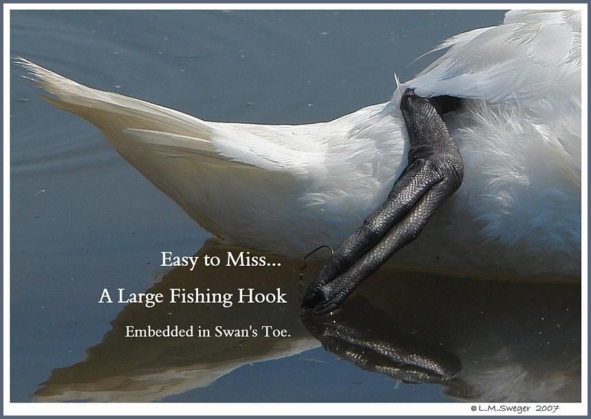 SWAN FISHING