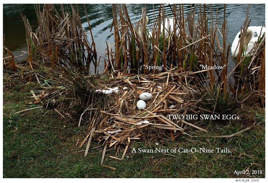 Swan Nesting Material
