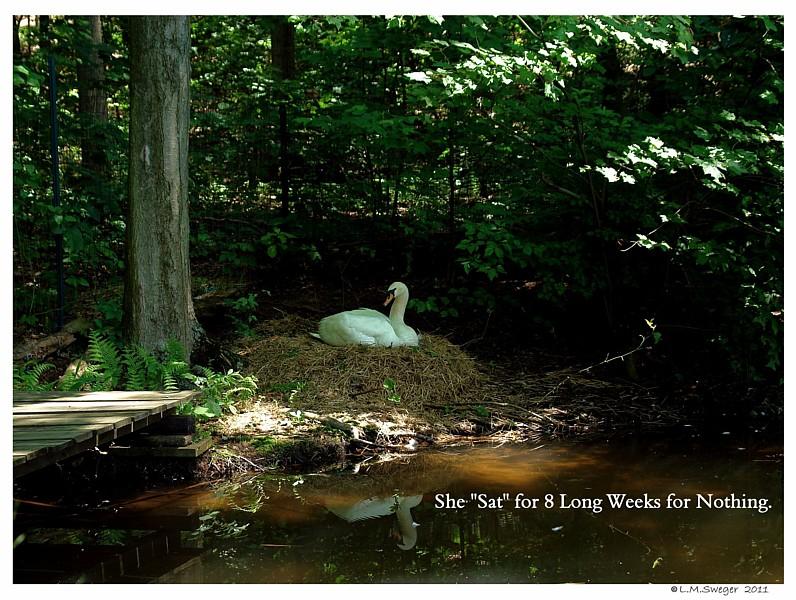 SAFE Swan Bedding Swan Nesting Material