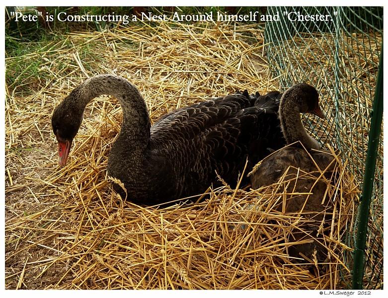 SAFE Swan Bedding