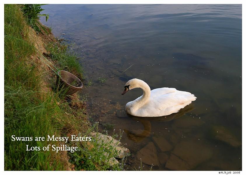 Swan Feeding Stations