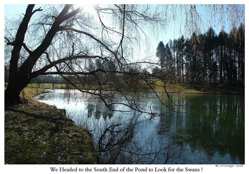 SWAN POND FROZE OVERNIGHT