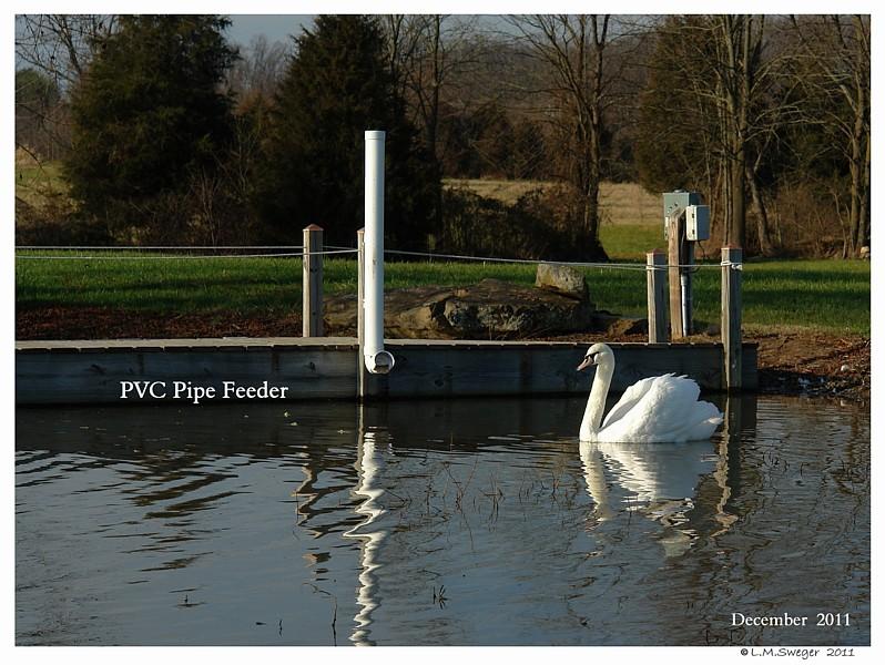 Feeding Station for Swans