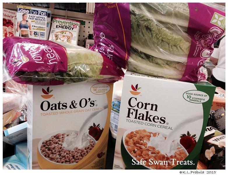 NO Bread Poor Diet for Swans Healthy Treats