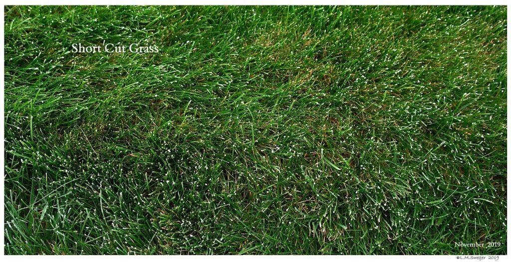Short Cut Grass Swan Under Chin-Tongue Bulge Impaction
