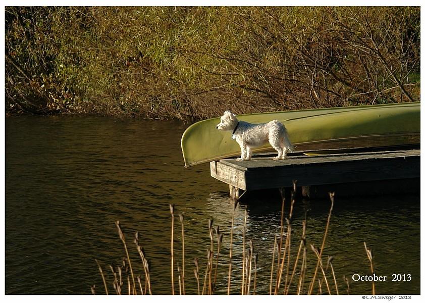 Busy Dog Bringing Swan Home