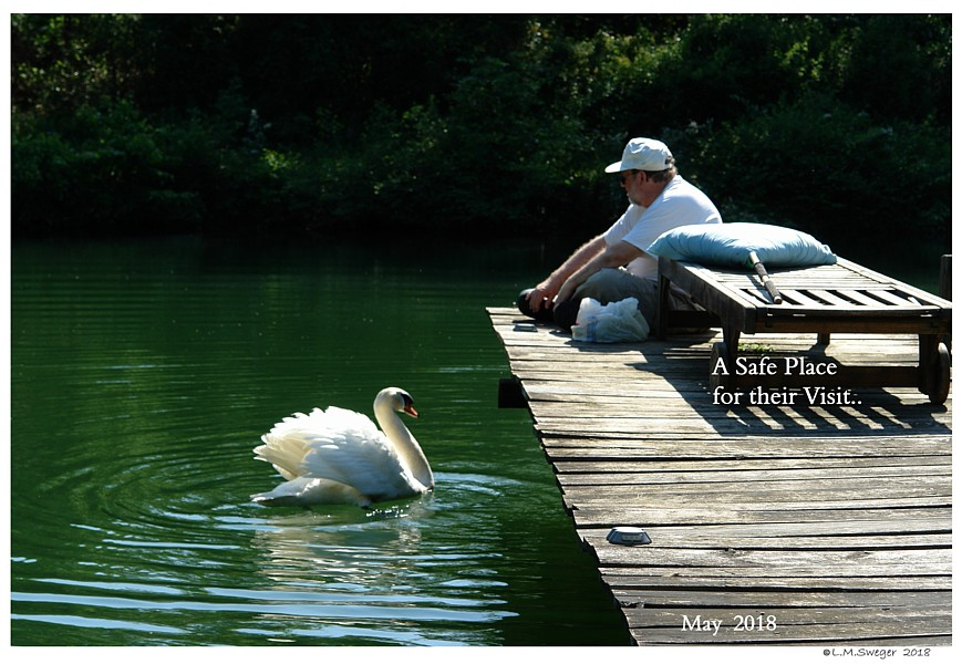 Working with Swans