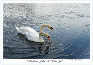 Mute Swans Living Free